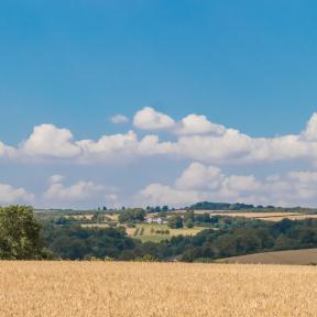 Field off Dean Lane towards East Chase - Andrew Chorley AWD Photography