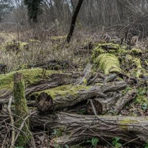 Garston Wood RSPB Nature Reserve near Sixpenny Handley - Andrew Chorley AWD Photography