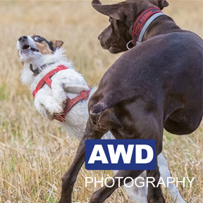 Pet Photographs in Sixpenny Handley - AWD Photography